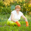 Happy  woman working in  vegetable garden — Stock Photo