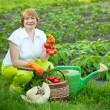 Stock Photo: Womwith vegetables harvest
