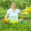 Woman working in field of carrot - Stock Photo