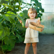 Child picking cucumbers in hothouse - Stock Photo