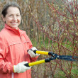 Female gardener cuts branches - Stock Photo