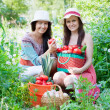 Women with harvested vegetables in garden — Stock Photo