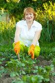 成熟的女人在花园中工作 — 图库照片