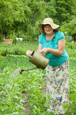 Mature woman watering vegetables — Stock Photo