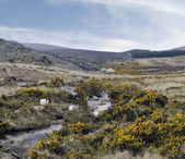 County Wicklow mountains, cheep — Stock Photo