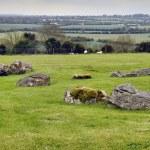 Panorama Boyne Valley near Knowth — Stock Photo