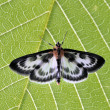 Stock Photo: Butterfly on green leaf