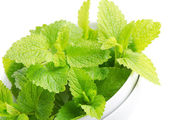 Mint isolated on white — Stock Photo