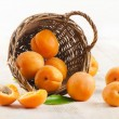Fresh apricots in the basket — Stock Photo