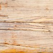 Wooden texture of a tree — Stock Photo