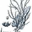 Stock Photo: Forage plants - serie of ilustration from encyclopedia