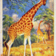 Giraffes — Stock Photo #11865832