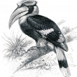 Great Hornbill - Buceros bicornis — Stock Photo