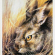 USSR - CIRCA 1989: Reproduction of antique postcard shows European hare (Lepus europaeus), also known as the brown hare, Eastern Jackrabbit and Eastern prairie hare, circa 1989 - Stock Photo