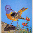 USSR - CIRCA 1984: Reproduction of antique postcard shows Rufous-tailed Rock-thrush, circa 1984 - Stok fotoğraf