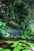 Bamboe kommuna — Stockfoto