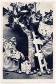Kätzchen gekleidet wie nüsse vom baum zu sammeln — Stockfoto