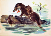 USSR - CIRCA 1957: Reproduction of antique postcard shows Otter, circa 1957 — Foto Stock