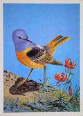 USSR - CIRCA 1984: Reproduction of antique postcard shows Rufous-tailed Rock-thrush, circa 1984 — Stock Photo
