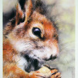 USSR - CIRCA 1989: Reproduction of antique postcard shows Squirrel, circa 1989 — Stock Photo