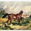 Stock Photo: USSR - CIRC1958: Reproduction of antique postcard shows horse had killed wolf, protecting foal, circ1958