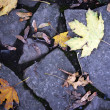 Autumn stone pavement - Stock Photo