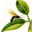 Fly, imitating biting insects — Stock Photo