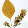 Herbarium — Stock Photo
