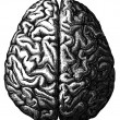 Cerebrum — Stock Photo #11875578