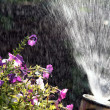 Watering — Stock Photo #11878205