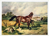 USSR - CIRCA 1958: Reproduction of antique postcard shows horse had killed a wolf, protecting the foal, circa 1958 — Stock Photo