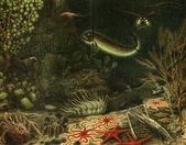 Deep-sea fauna — Stock Photo