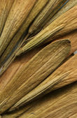 Elm seeds — Stock Photo