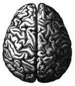 головной мозг - иллюстрация из энциклопедии издательства образования, санкт-петербург, российская империя, 1896 — Стоковое фото
