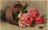 Roses in the basket — Stock Photo