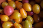 Little cherry tomato — Stock Photo