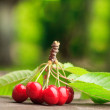Foto Stock: Sweet cherry