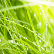 Green grass — Stock Photo #11040229