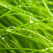 Green grass — Stock Photo #11040246