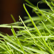 Green grass — Stock Photo #11040358