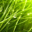 Green grass — Stock Photo #11040494