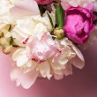 Peonies on pink — Stock Photo