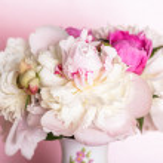 Peonies on pink — Stock Photo #11041041
