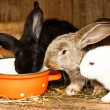 Stock Photo: Rabbits' hutch