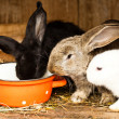 Rabbits' hutch — Stock Photo