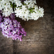 Lilac on wood — Stock Photo #11599578