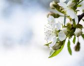 Spring bokeh — Stock Photo