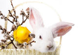 Rabbit in a basket — Stock Photo
