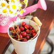 Cherries outdoor — Foto Stock