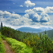 Landscape with pathway — Stock Photo